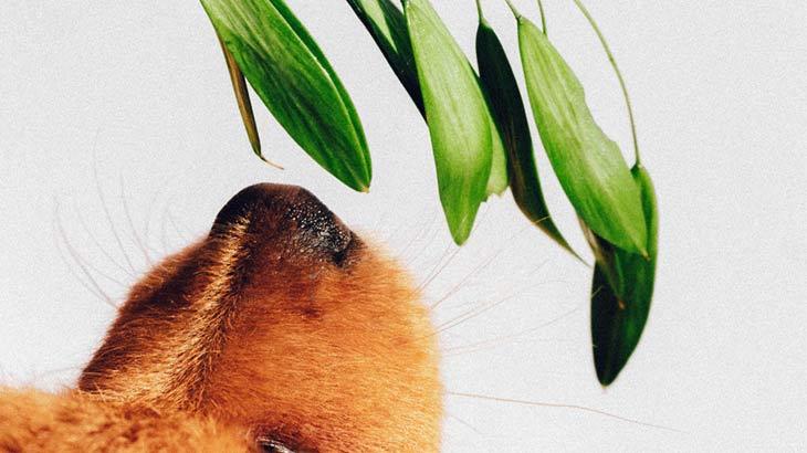 臭いを連想するイメージ画像