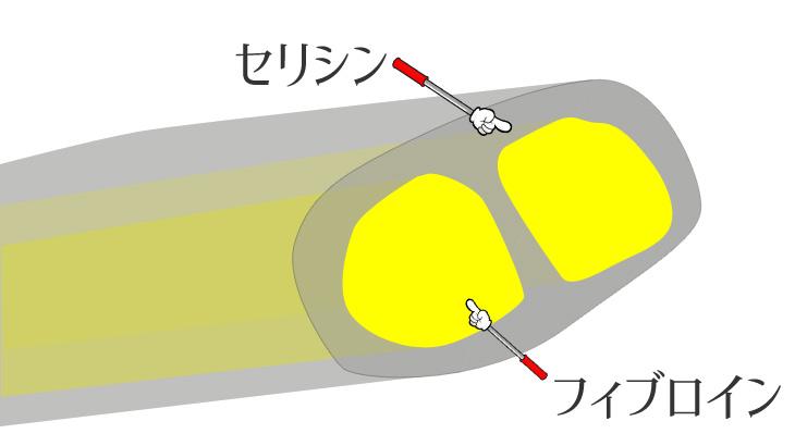 繭糸の主成分セリシンとフィブロインの説明図