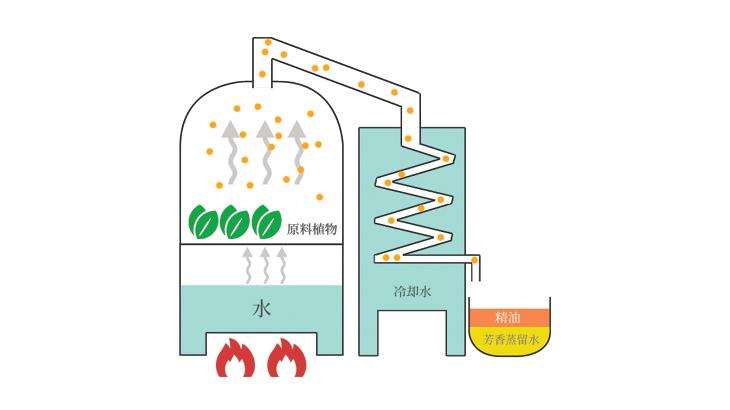 精油を製造する水蒸気蒸留法の解説図