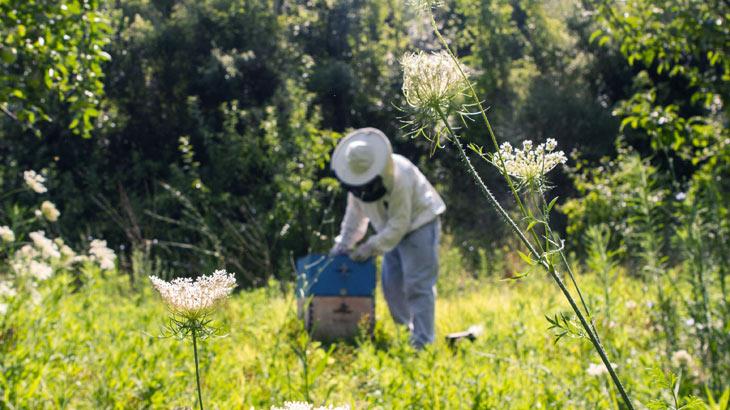 養蜂のイメージ画像