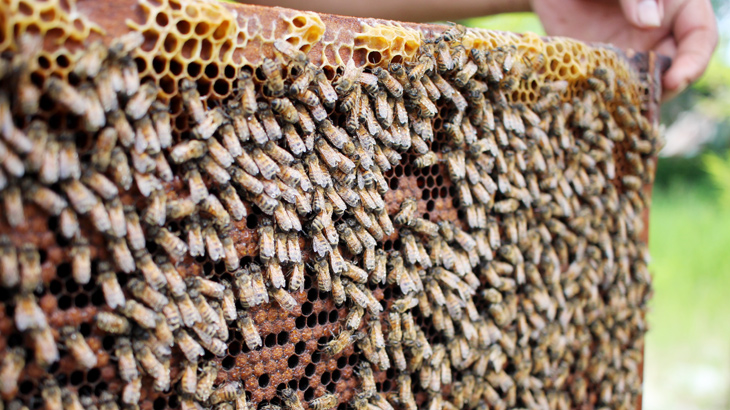 ミツバチの巣の画像