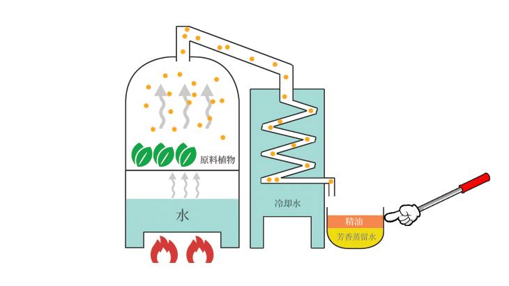 エッセンシャルオイルの製造工程解説図
