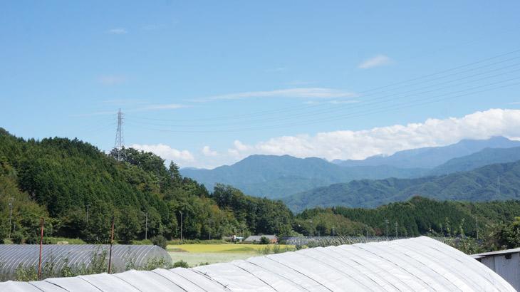 純国産アロマシリーズ「日本の香り」の生産現場写真