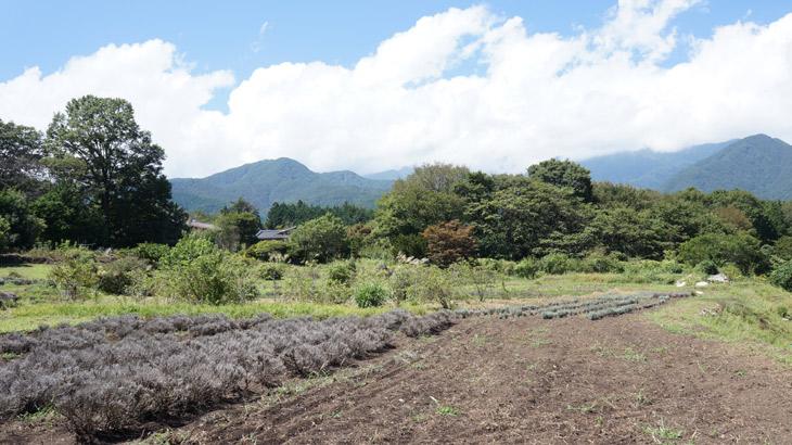 純国産アロマシリーズ「日本の香り」の生産農場の写真