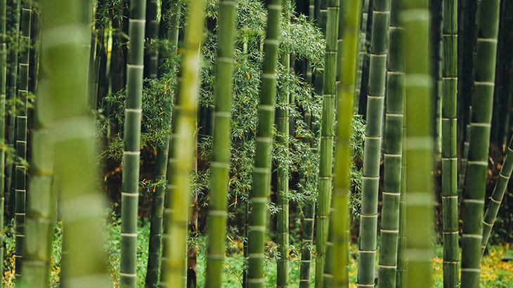竹林のイメージ画像