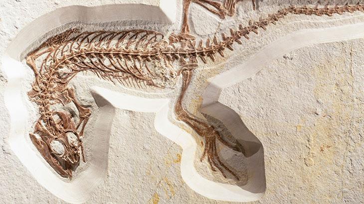 化石のイメージ画像